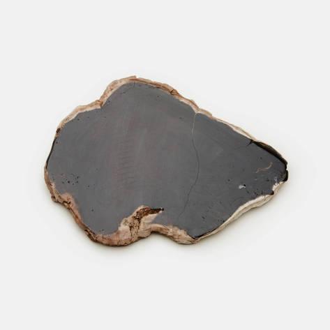 Andrianna Shamaris — Petrified Wood Slab
